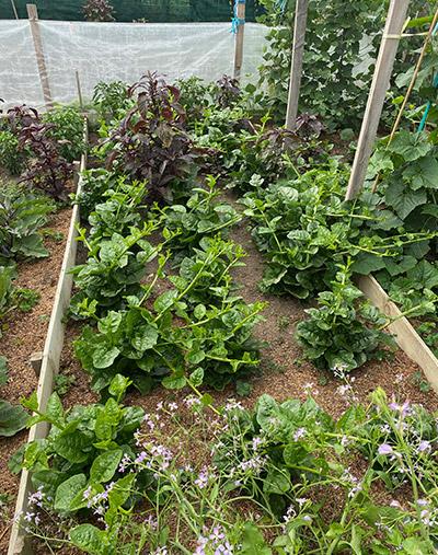 garden local board - Our Gardens