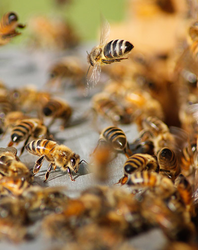 us bees on hive - Home