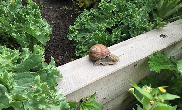 us pest management - Our Gardens