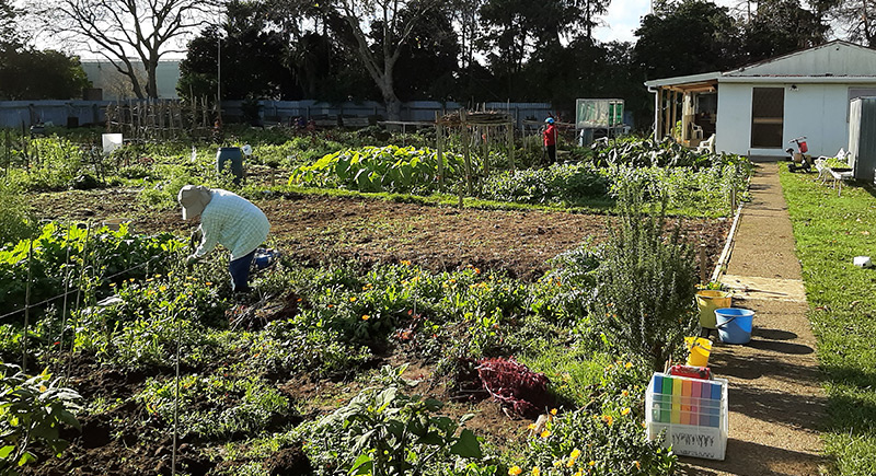east tamaki teaching garden - Our Gardens