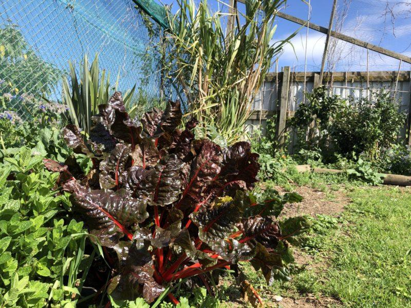 20200925 214925034 iOS scaled e1601857598800 - Our Gardens