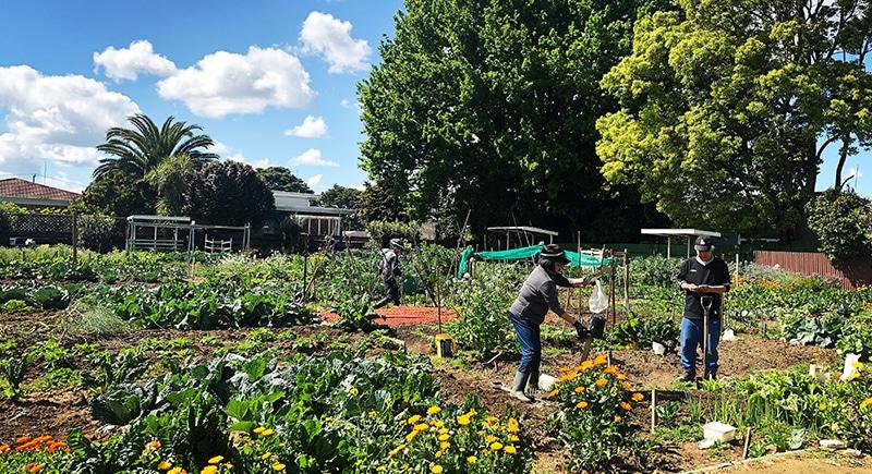 GARDENS 0002 SATDIUM - Our Gardens
