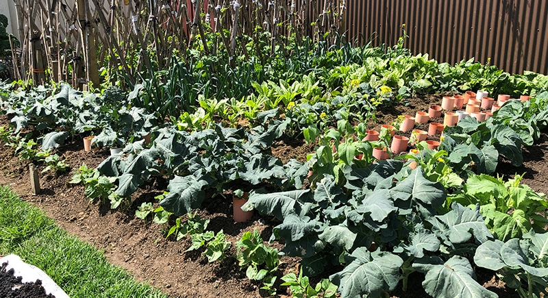 GARDENS 0003 MAICH - Our Gardens