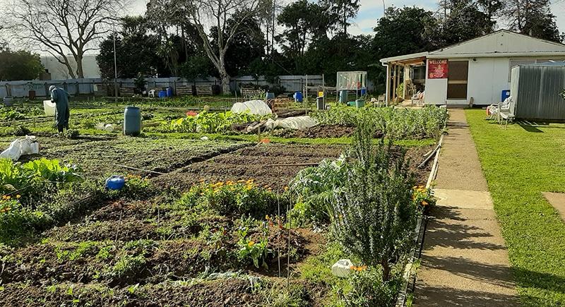 GARDENS 0004 EAST TAMAKI - Our Gardens